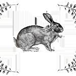 Bunny Photoshop